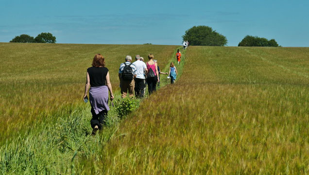 Red Kite Ramble 23 June 2013: Raise funds for Karibuni Children by taking part in this sponsored walk in the Chilterns